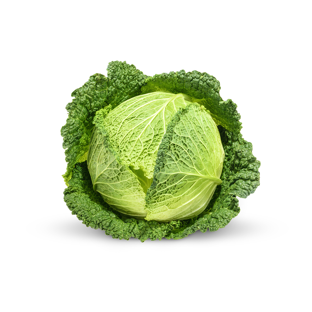 Savoy Cabbage Veggycation