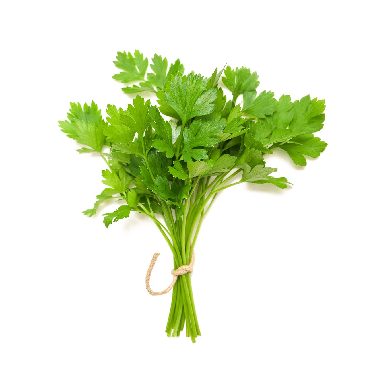 Coriander, leaves