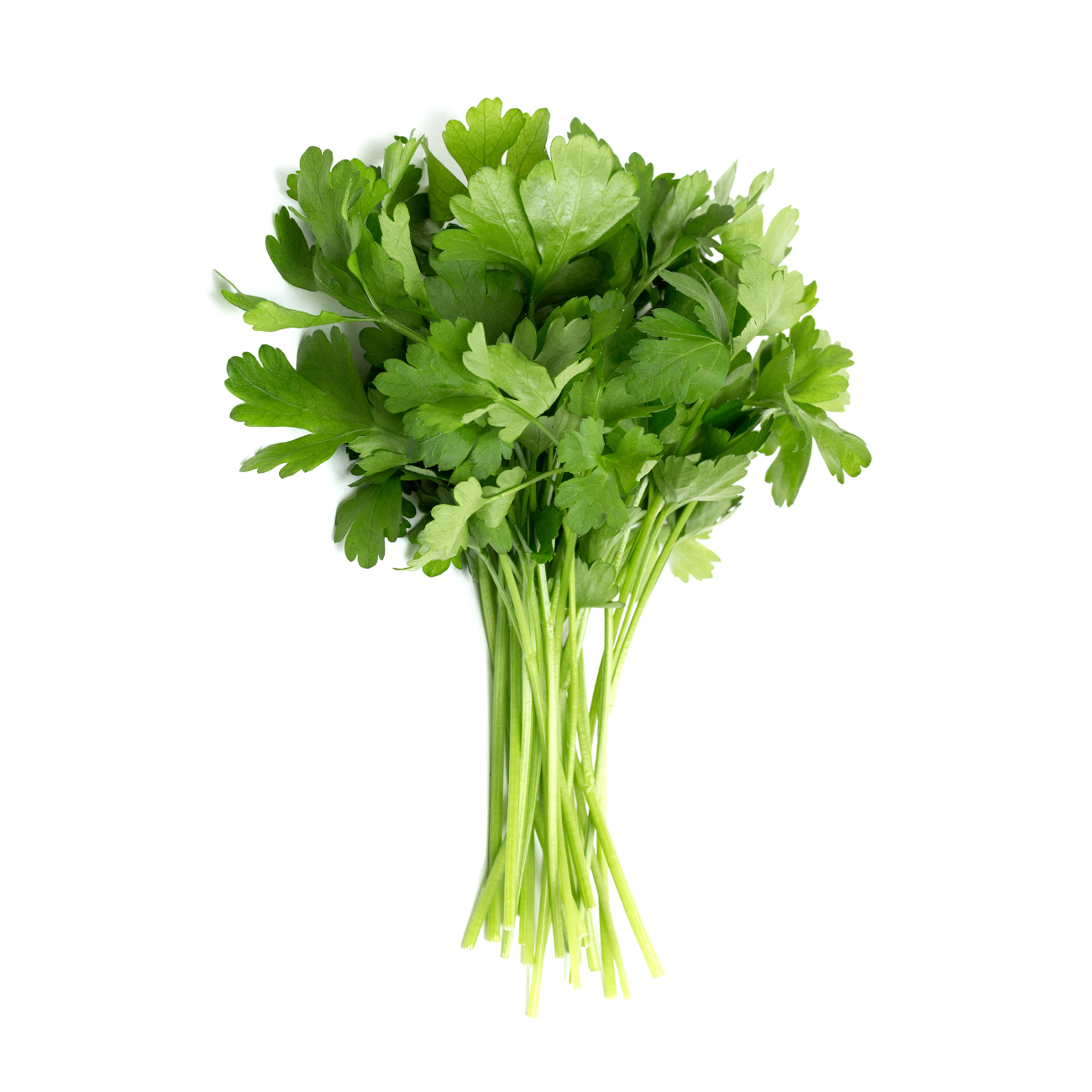 parsley,-continental.jpg